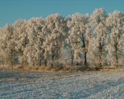 0025-Zimowa aleja