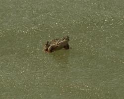 0001 Żabka na lodzie