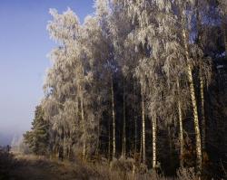 0027 Leśna droga